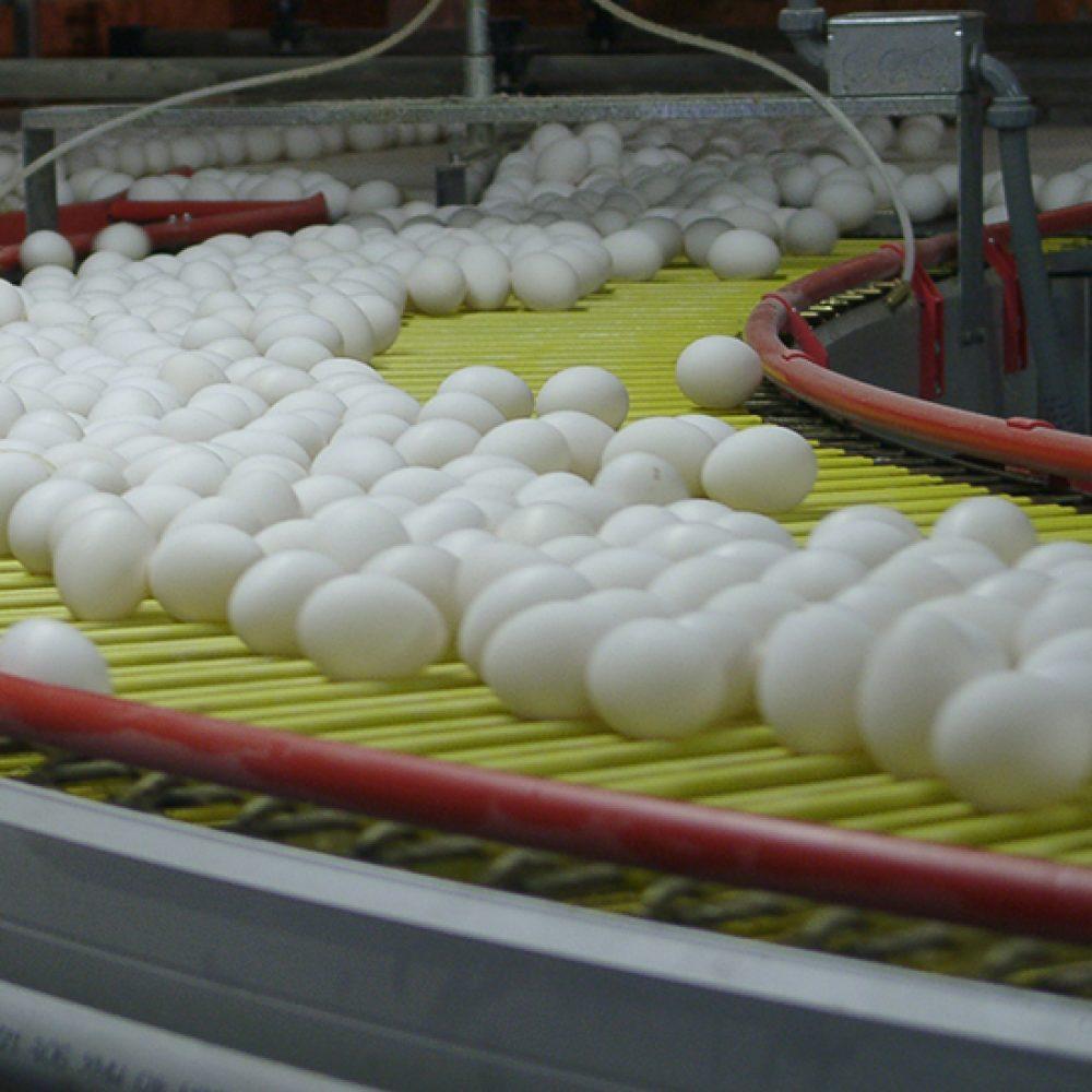 Transportador de Huevos